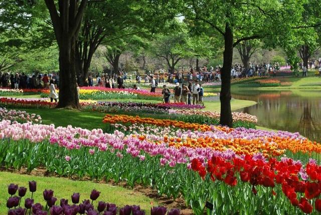 Vòng quanh thế giới ngắm những vườn tulip vạn người mê 6.jpg