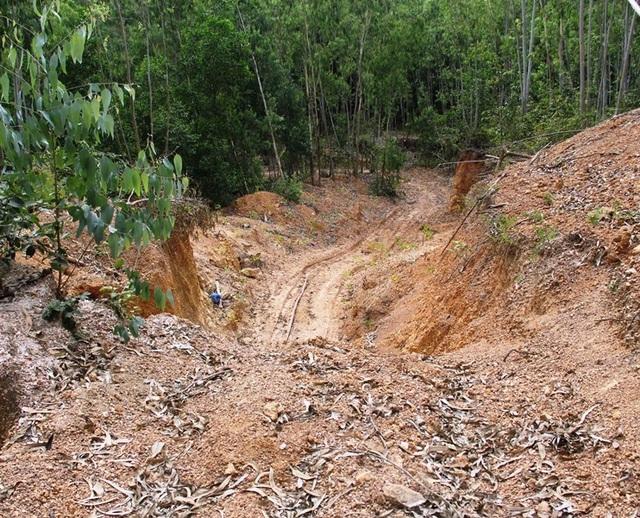Nhiều đối tượng đào hàng loạt hang sâu bí ẩn trên đất trồng keo của dân tại Bình Định! - 3