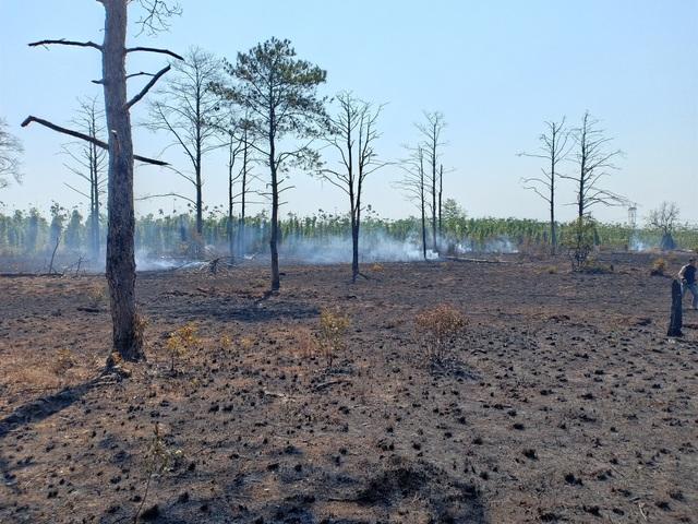 """Đắk Nông: Đất rừng dọc quốc lộ bị """"xẻ thịt"""", cơ quan chức năng bất lực? - 1"""