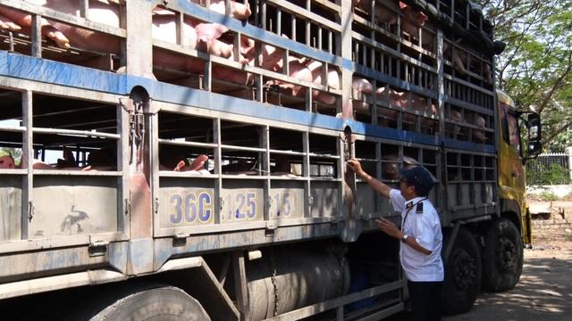Lực lượng thú y tại Trạm Kiểm dịch Ông Đồn, huyện Xuân Lộc (Đồng Nai) kiểm tra xe vận chuyển heo từ miền Bắc vào miền Nam tiêu thụ.