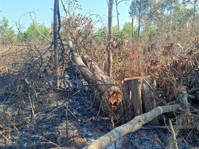 """Đắk Nông: Đất rừng dọc quốc lộ bị """"xẻ thịt"""", cơ quan chức năng bất lực? - 5"""