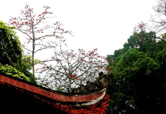 """Hoa gạo """"thắp lửa"""" khắp núi rừng Hương Sơn - 5"""