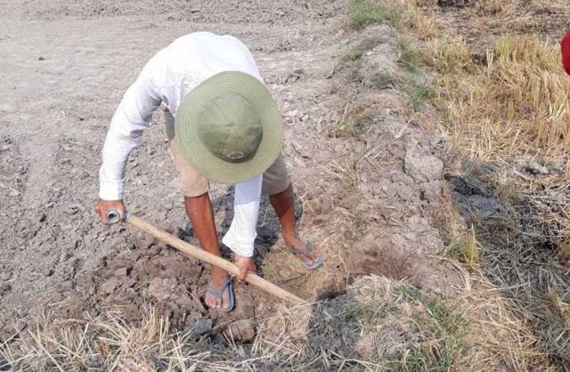 """Theo nông dân, việc bán đất mặt ruộng vừa """"giải phóng"""" đất gò, vừa có thu nhập, còn năng suất cho những mùa vụ sau thì không rõ"""
