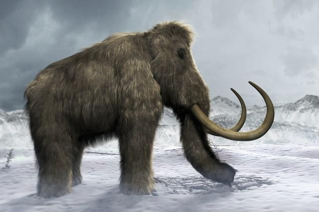 Bước tiến quan trọng trong việc đưa voi ma mút lông trở lại - 1