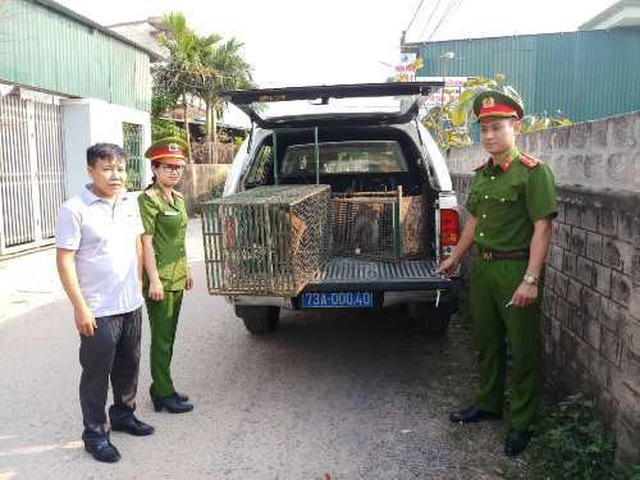 Tiếp nhận 4 cá thể khỉ quý hiếm thả về tự nhiên - 1