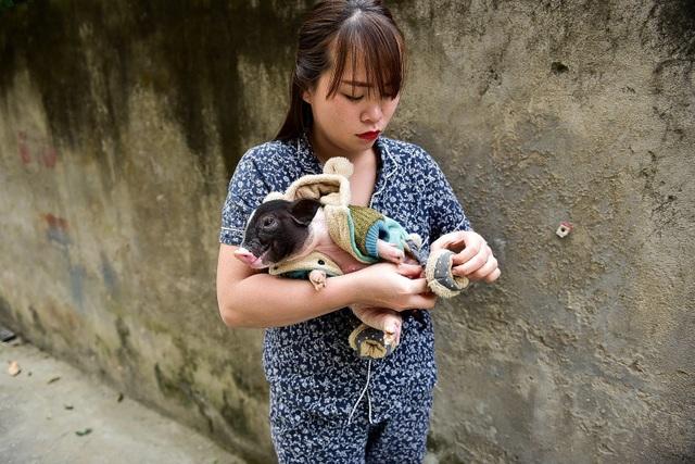 Lợn cảnh 2,5 triệu/con: Mốt thú cưng sang chảnh của quý cô Hà Thành - 8