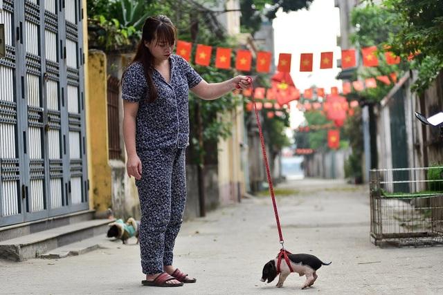 Lợn cảnh 2,5 triệu/con: Mốt thú cưng sang chảnh của quý cô Hà Thành - 14