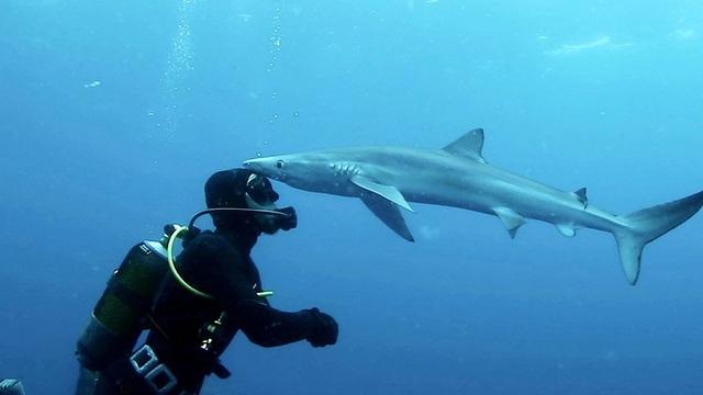 """Cảnh cực hiếm: Cá mập… """"hôn"""" thợ lặn - 1"""