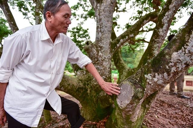 Bí ẩn cây vải tổ 200 năm được xác lập kỷ lục lâu đời nhất Việt Nam - 7