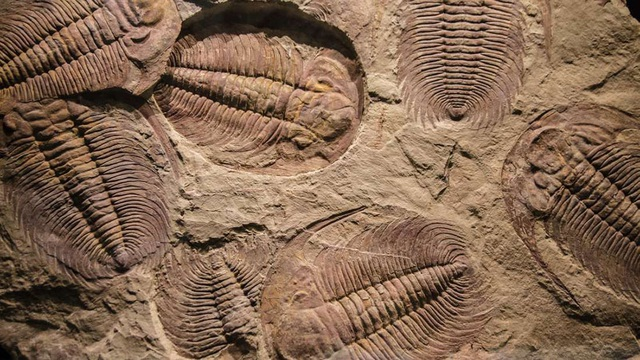 Lịch sử tiến hóa của động vật trên Trái Đất có thể phải viết lại - 1