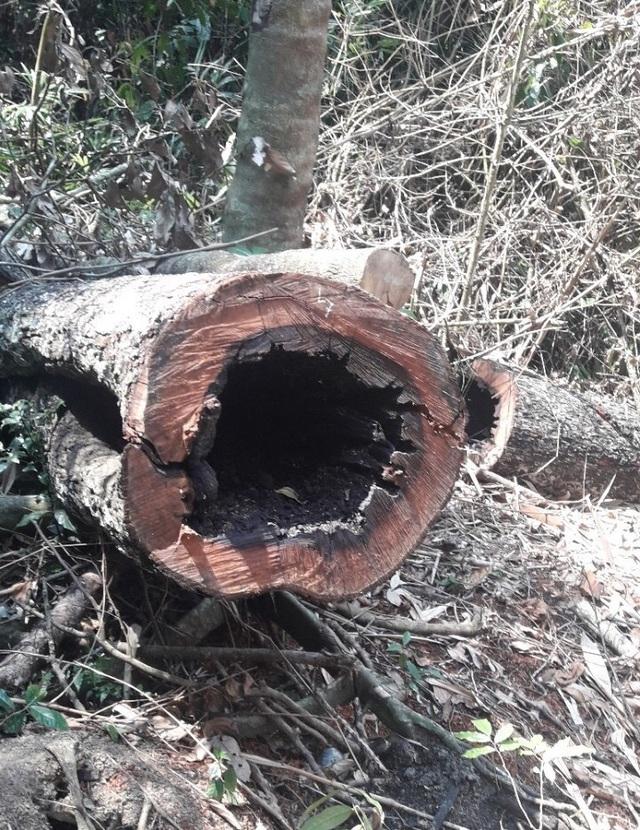 Tiết lộ bất ngờ về chân tướng nhóm lâm tặc phá rừng gỗ quý ở Phong Nha - Kẻ Bàng - 2
