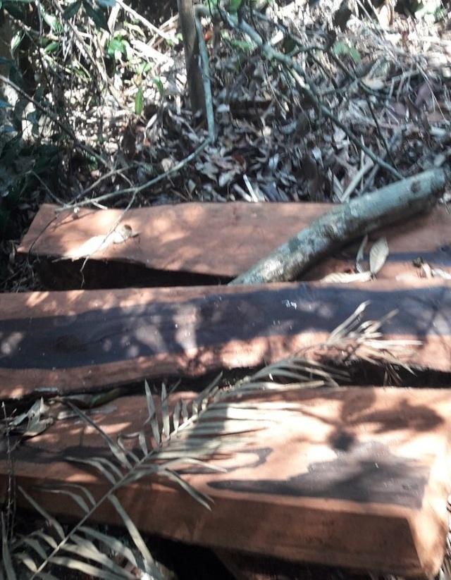 Tiết lộ bất ngờ về chân tướng nhóm lâm tặc phá rừng gỗ quý ở Phong Nha - Kẻ Bàng - 1