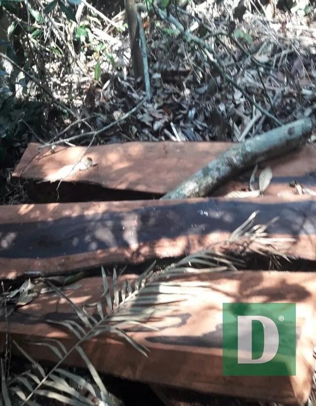 Rừng gỗ quý ở Phong Nha - Kẻ Bàng bị phá chỉ cách đồn biên phòng... 1km - 8
