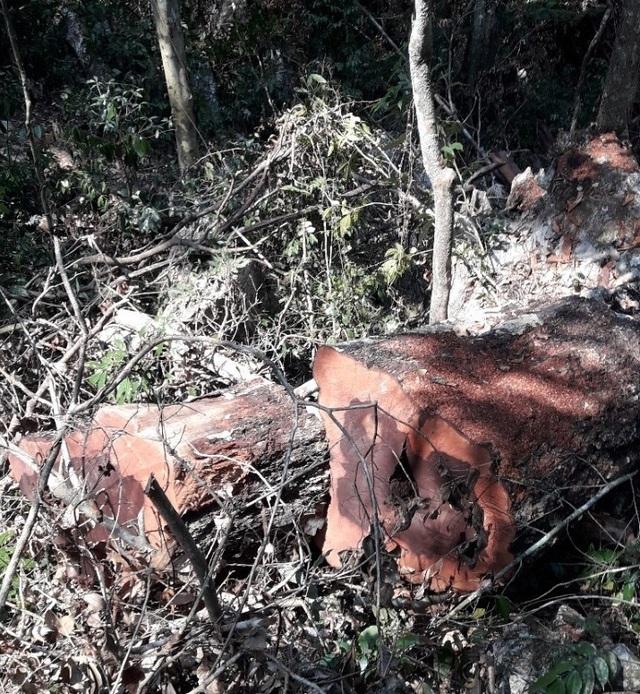 Tiết lộ bất ngờ về chân tướng nhóm lâm tặc phá rừng gỗ quý ở Phong Nha - Kẻ Bàng - 4