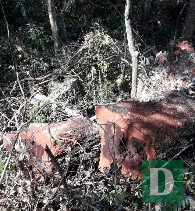 Bí thư Tỉnh ủy Quảng Bình chỉ đạo làm rõ vụ phá rừng tại VQG Phong Nha - Kẻ Bàng - 2