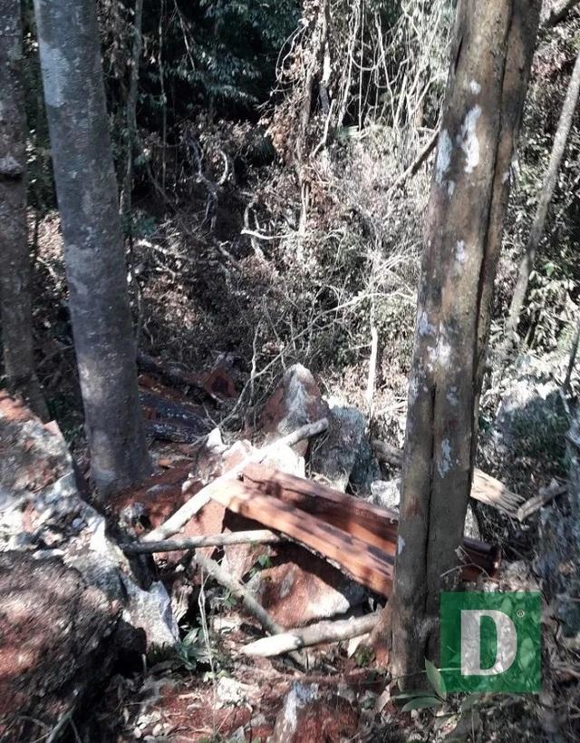 Rừng gỗ quý ở Phong Nha - Kẻ Bàng bị phá chỉ cách đồn biên phòng... 1km - 4