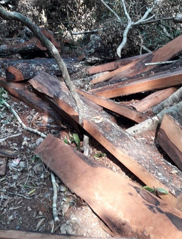Vụ phá rừng gỗ quý ở VQG Phong Nha - Kẻ Bàng: Chuyển giao công an khởi tố vụ án - 1