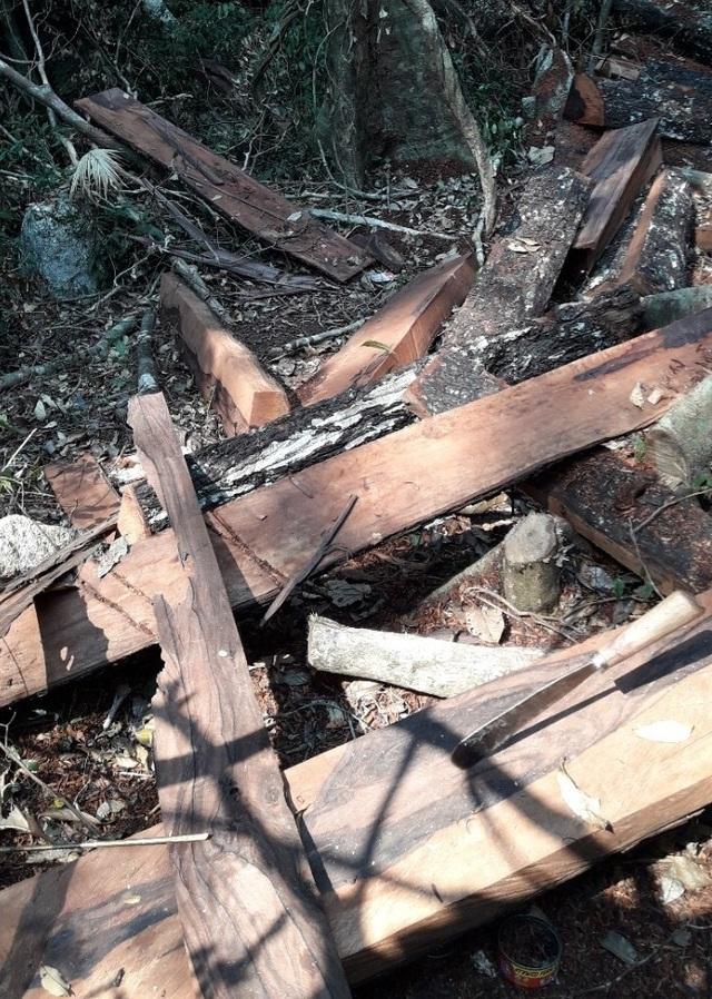 Bắt giam nhóm đối tượng phá rừng gỗ quý tại Phong Nha – Kẻ Bàng - 2