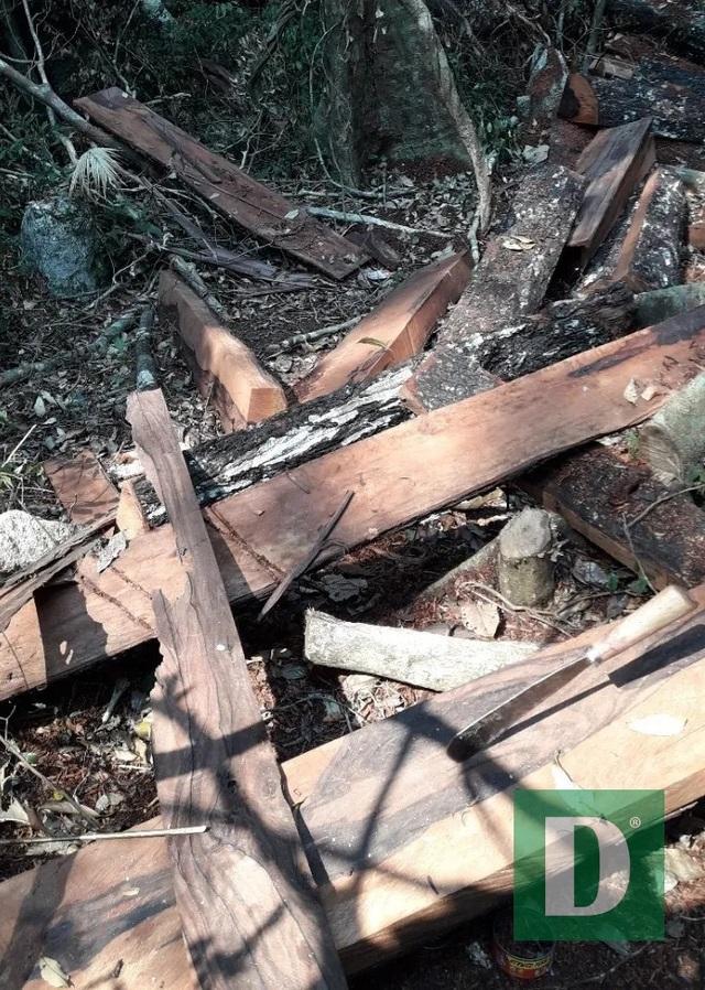Rừng gỗ quý ở Phong Nha - Kẻ Bàng bị phá chỉ cách đồn biên phòng... 1km - 3