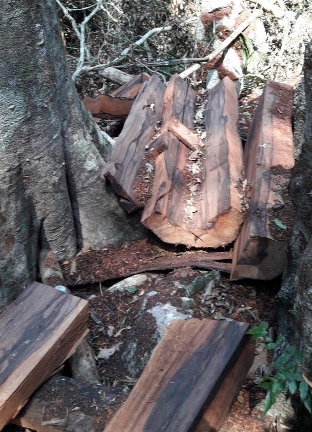 Vụ phá rừng gỗ quý ở VQG Phong Nha - Kẻ Bàng: Chuyển giao công an khởi tố vụ án - 2