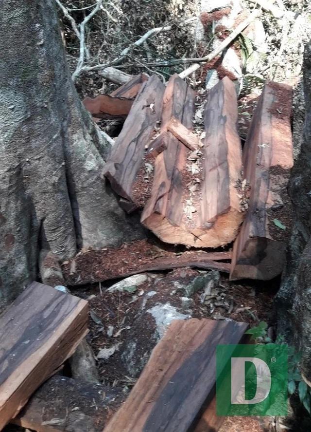 Bí thư Tỉnh ủy Quảng Bình chỉ đạo làm rõ vụ phá rừng tại VQG Phong Nha - Kẻ Bàng - 1