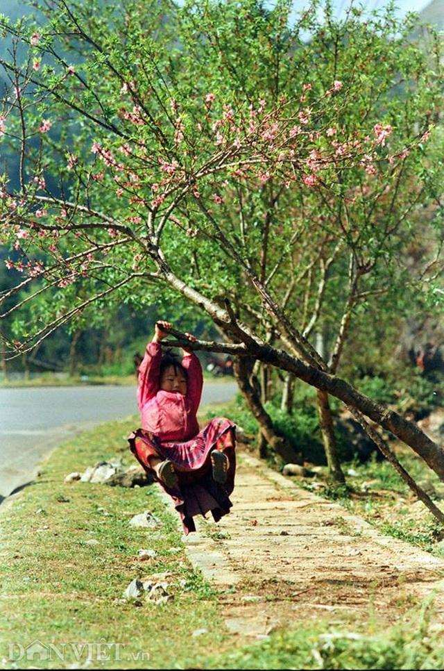 Ngắm hoa đào nở muộn tuyệt đẹp trên cao nguyên đá Đồng Văn - 8