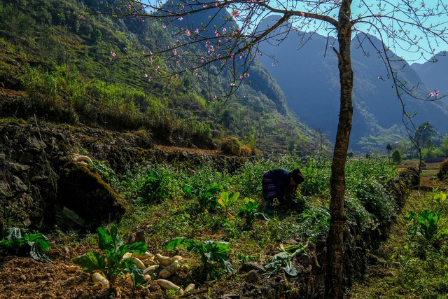 Những bức ảnh khiến ai cũng muốn đi Hà Giang tháng 3 này - 7