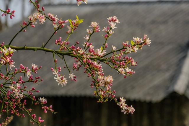 Những bức ảnh khiến ai cũng muốn đi Hà Giang tháng 3 này - 15