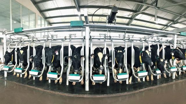 Vinamilk nhập thêm 1.600 bò sữa HF và A2 từ Mỹ - 3