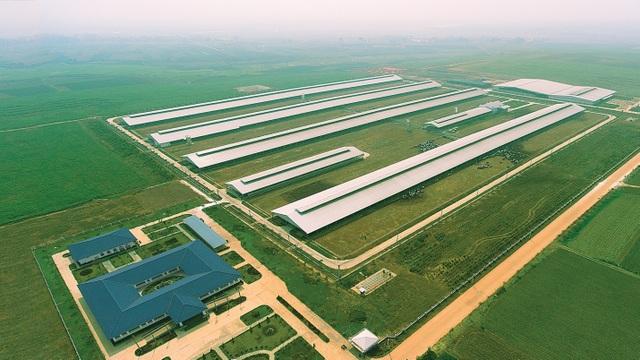 Vinamilk nhập thêm 1.600 bò sữa HF và A2 từ Mỹ - 4