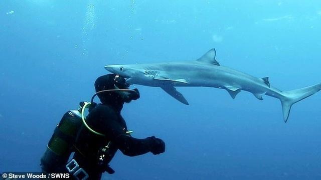 Khoảnh khắc cá mập hôn trán thợ lặn dưới biển - 1