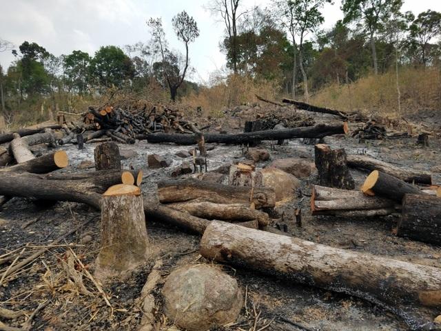 Hoang tàn cảnh tận thu gỗ, phá rừng làm rẫy ngay cách trạm quản lý bảo vệ rừng - 1