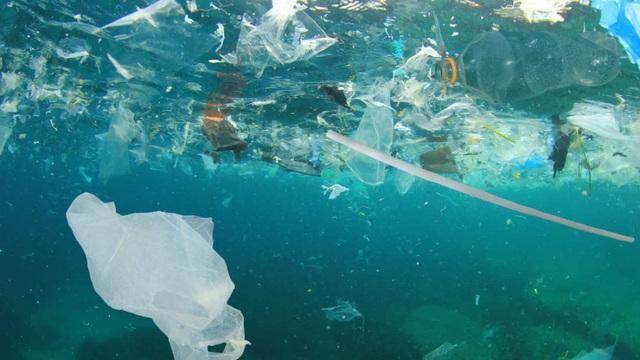Các mầm bệnh phát tán rộng và nhanh hơn nhờ... rác thải nhựa - 1
