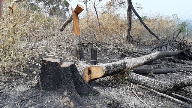Hoang tàn cảnh tận thu gỗ, phá rừng làm rẫy ngay cách trạm quản lý bảo vệ rừng - 6
