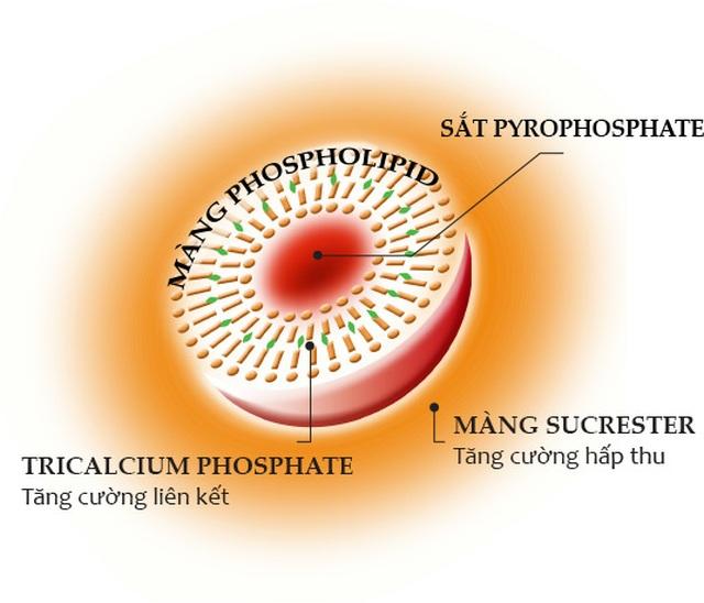 Sucrosomial – Công nghệ đột phá mới trong hỗ trợ điều trị thiếu máu do thiếu sắt - 1