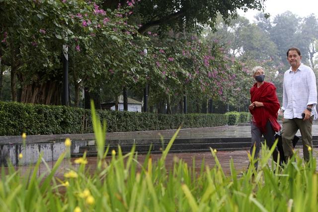 Hoa ban nở khắp phố Hà Nội - 6
