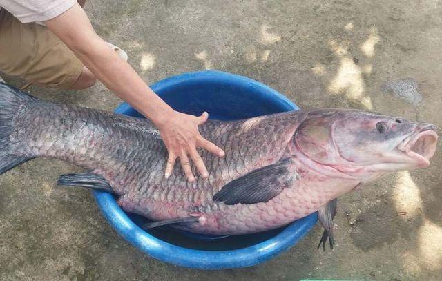 """Kỳ lạ lươn """"khổng lồ"""" dài gần mét, cá lạ nặng một tạ xôn xao dư luận  - 10"""