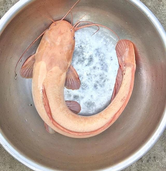 """Kỳ lạ lươn """"khổng lồ"""" dài gần mét, cá lạ nặng một tạ xôn xao dư luận  - 1"""