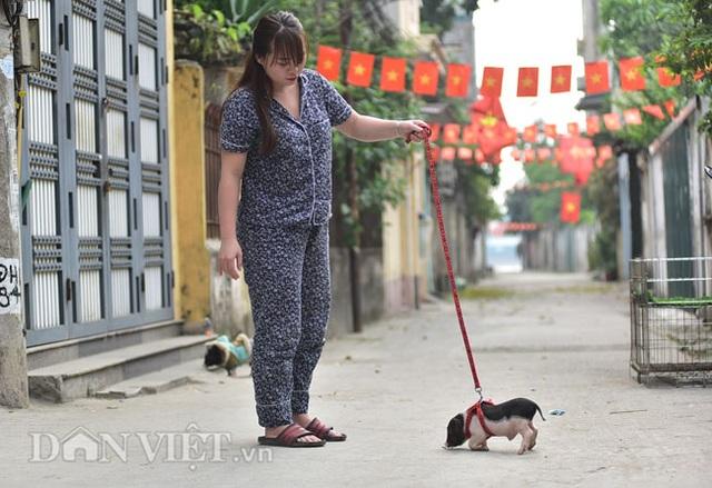Ngắm lợn mini tiền triệu giới trẻ Hà thành săn lùng làm thú cưng - 11