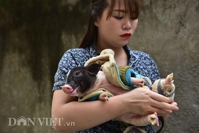 Ngắm lợn mini tiền triệu giới trẻ Hà thành săn lùng làm thú cưng - 9