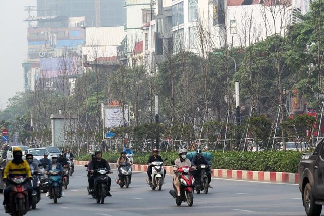 Hàng cây phong lá đỏ thay lá, ngả màu sang đen giữa phố Hà Nội - 13