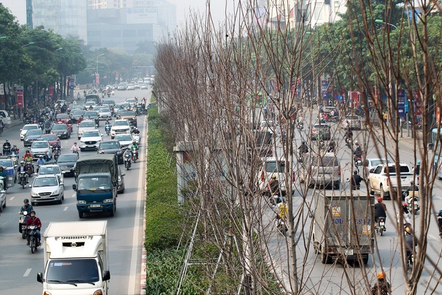 Hàng cây phong lá đỏ thay lá, ngả màu sang đen giữa phố Hà Nội - 11