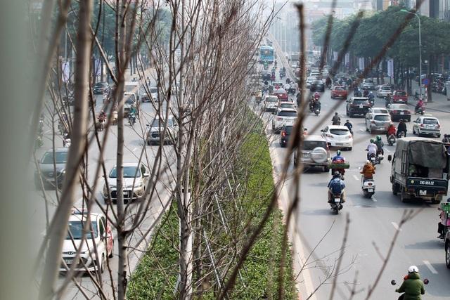 Hàng cây phong lá đỏ thay lá, ngả màu sang đen giữa phố Hà Nội - 2