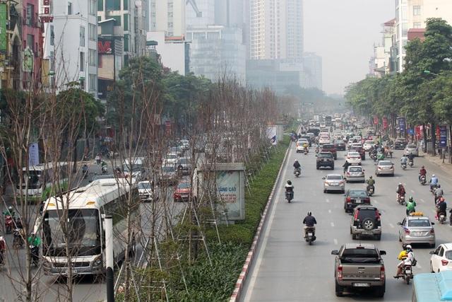 Hàng cây phong lá đỏ thay lá, ngả màu sang đen giữa phố Hà Nội - 10