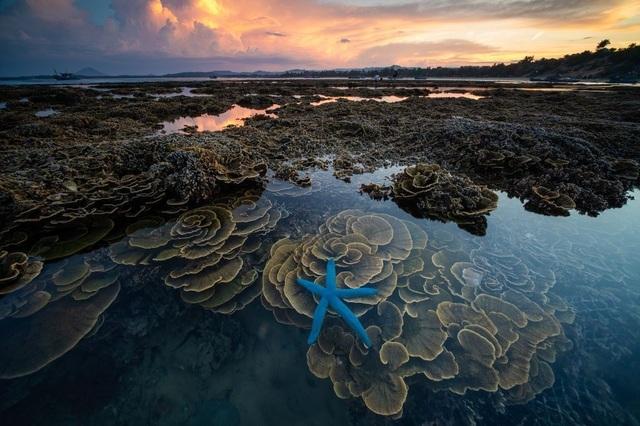 Tác phẩm của nhiếp ảnh gia người Việt lọt top 12 bức đẹp nhất trên National Geographic - 6
