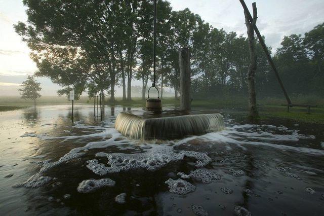 Kỳ lạ: Cây cổ thụ tự phun nước xối xả như đài phun nước - 1