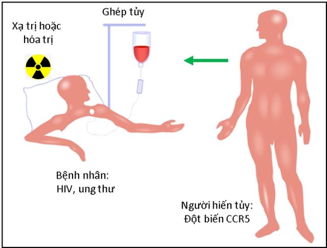 Thụ thể CCR5 và sự lây nhiễm HIV - 3