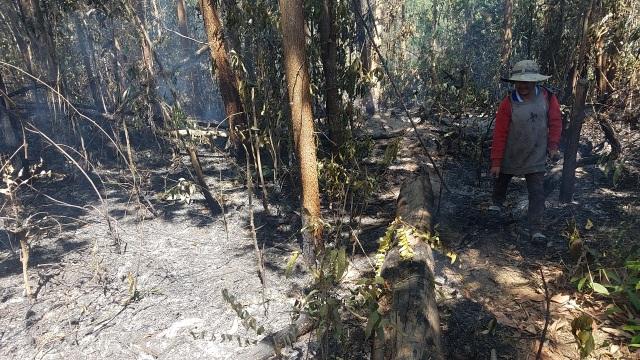 Cháy rừng lớn, huy động hàng trăm người dân cùng dập lửa cứu rừng - 2