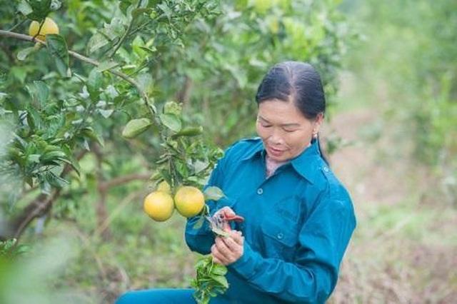 Doanh nghiệp cam tiên phong kết nối với các hộ nông dân tại Nghệ An - 1