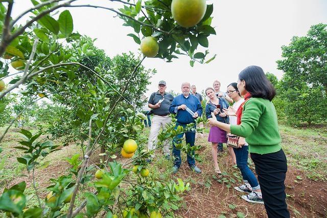 Doanh nghiệp cam tiên phong kết nối với các hộ nông dân tại Nghệ An - 3